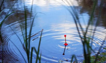 Fishing Floats – Types & How to Set Them Up