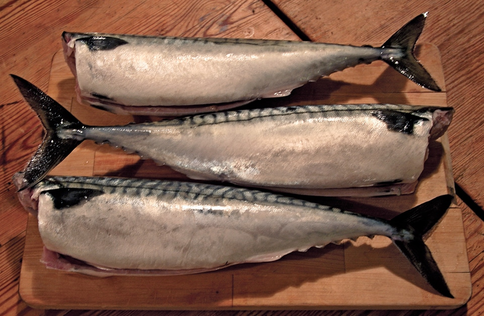 Mackerel Bait
