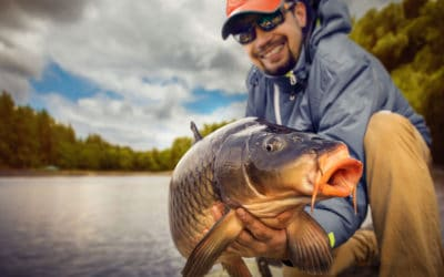 Stalking For Carp: A Basic Guide