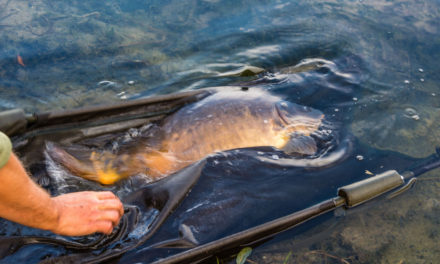 Carp Care: Keeping Carp Safe on the Bank