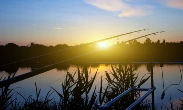 Carp Angling in Early Spring: Some Great Advice