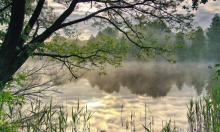 Locating Carp Through Spring: Top Tips & Tricks