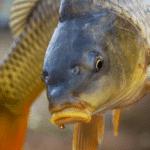 Fishing with Pop Ups: Spring Fishing & Beyond