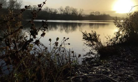 Winter Carping on the Maggots: Stay Warm and Keep the Bites Coming