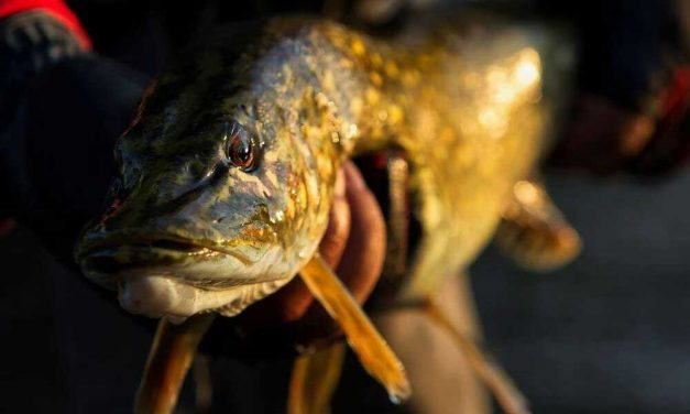 River Fishing for Pike: Where to Find Them