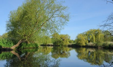A Basic Guide to River Fishing for Carp
